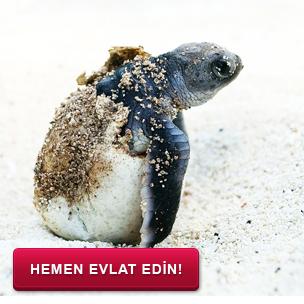 Deniz Kaplumbağası Wwf